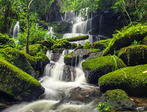 Séjour Reiki dans les Vosges